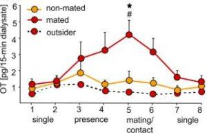 orgazmus-a-prolaktin-oxytocin